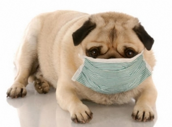 allergictodogs