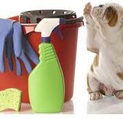 cleaningdog