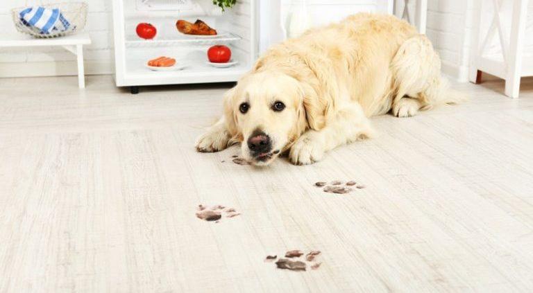 dog-paw-print-768x512