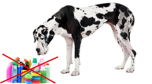 kutyaáthúz