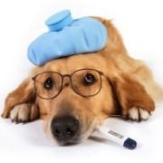 sick-dog-300x201