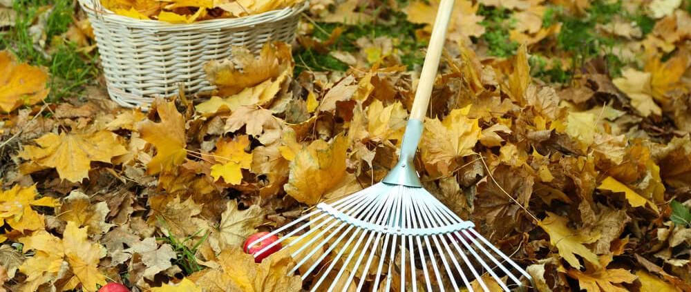 autumn-leaves-rake-apples-basket