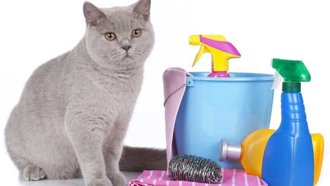 clean-cat.jpg.696x0_q80_crop-smart