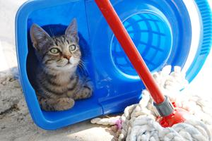 how-to-clean-cat-urine_126941345.s300x300