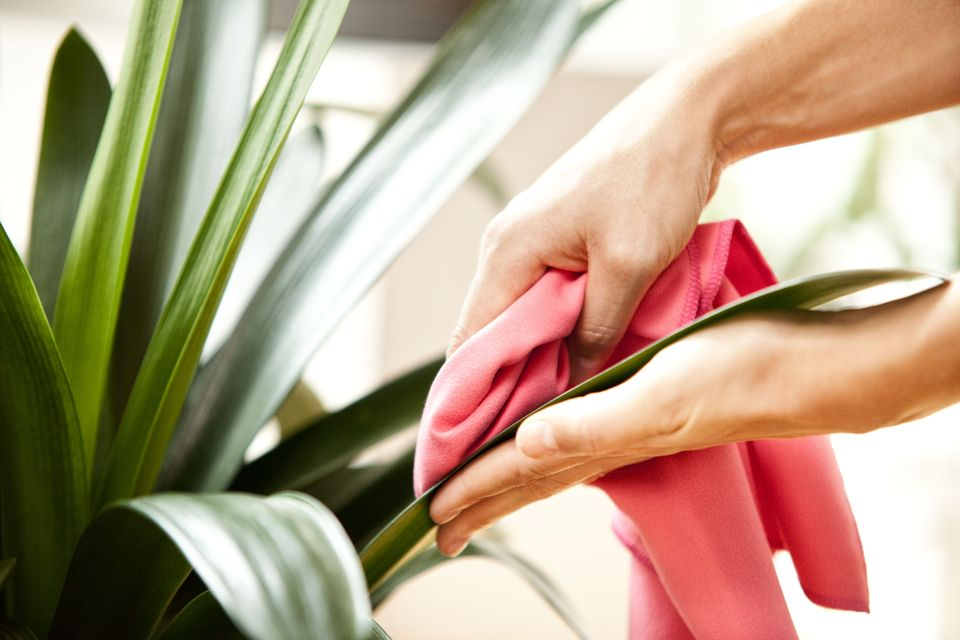 woman-wiping-leaves-of-a-plant-588494563-58758b9a5f9b584db36cef53